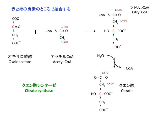 クエン酸の合成