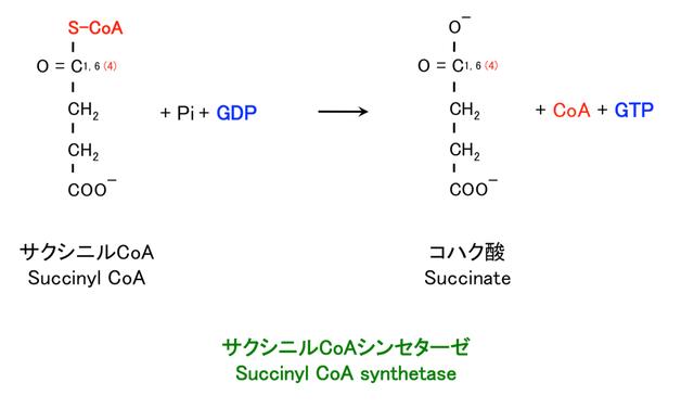 サクシニルCoAの酸化