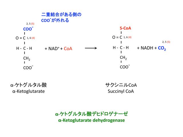 サクシニルCoAの生成