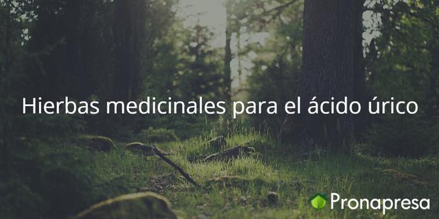 Hierbas medicinales para el ácido úrico