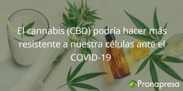 El cannabis (CBD) podría hacer más resistente a nuestras células ante el COVID-19