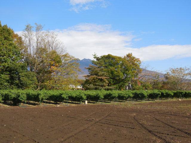 畑の周りは紅葉が始まりました。