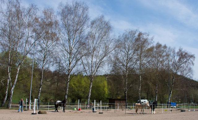 Unterbringung der Kurspferde