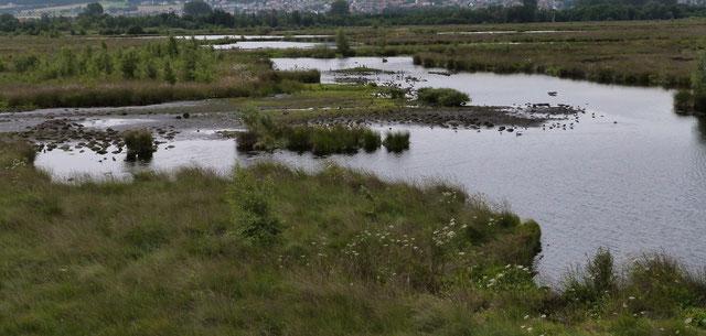 Moorsee; Große Torfmoor