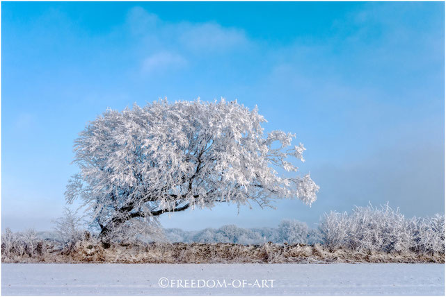 """Winterzauber""   magic of winter"