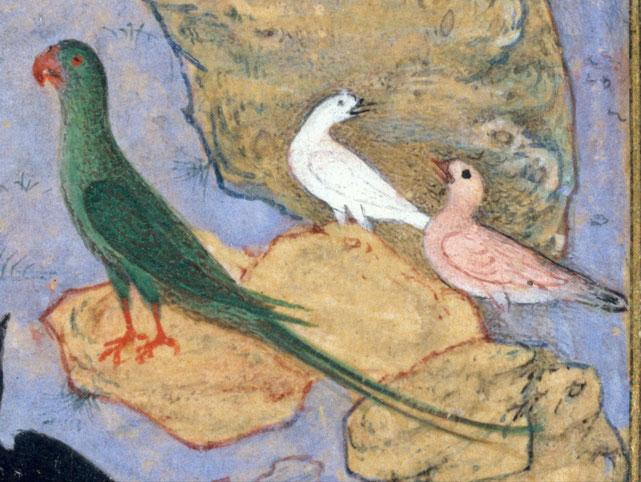 Illustrazione del Mantiq al-Tayr di Farid al-din 'Attâr