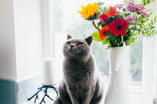 キャットシッターねこやま yokohama 横浜 猫 ネコ キャットシッター 猫シッター ペットシッター 横浜市旭区