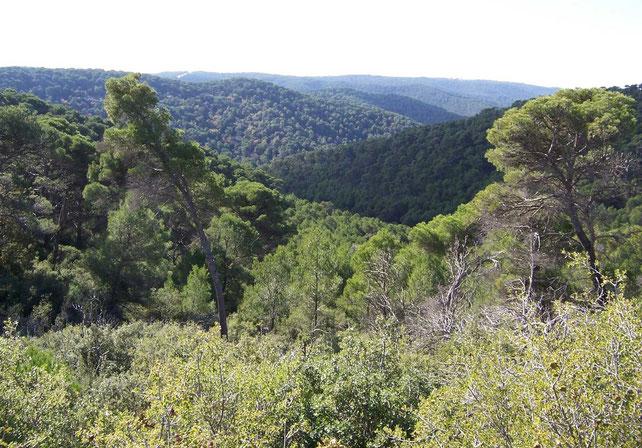 forêt-classée-réserve-naturelle-Saragosse-amandes