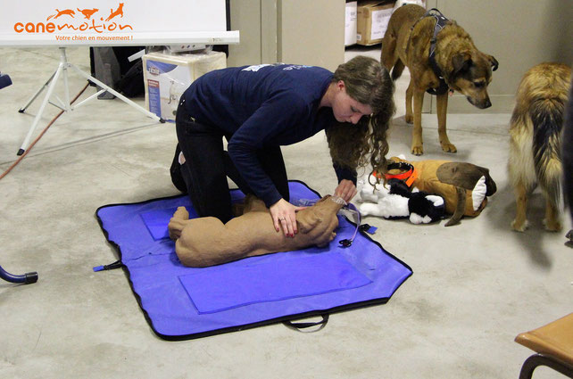massage cardiaque, chien, dog, premiers secours, urgence, emergency, humanimal, formation