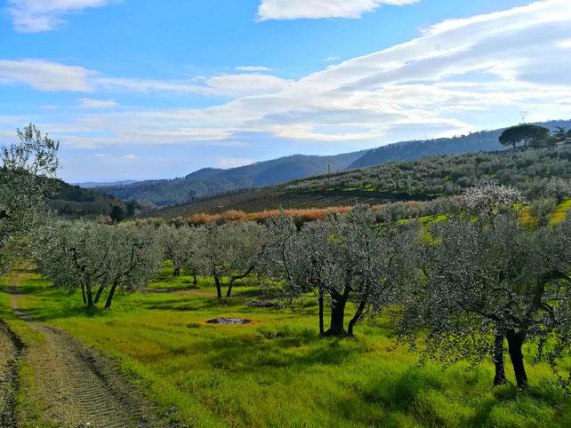 Carmignano DOCG. Etesiaca itinerari di vino blog
