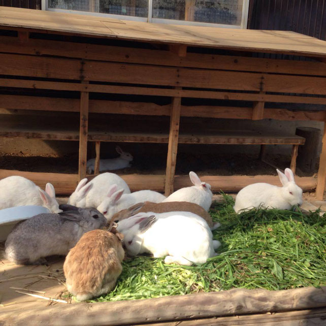 うさぎ 栗山町 北海道 無料動物園