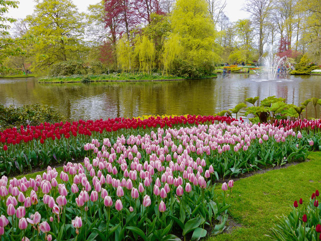 Teich auf dem Keukenhof in Holland Sehenswürdigkeit  Blumenfestival Keukenhof Holland Frühlingsblüten