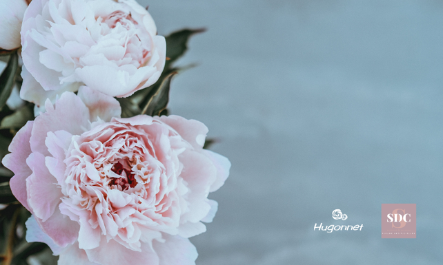 Hugonnet, fleurs artificielles BtoB
