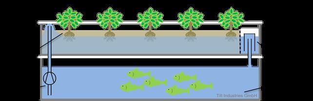 Ebbe-Flut-System, Tiefwasser Kultur,  Aquaponik, Hydroponik, Kreislauf, Nachhaltigkeit, Tilt Industries, Schema, Grafik, Zeichnung