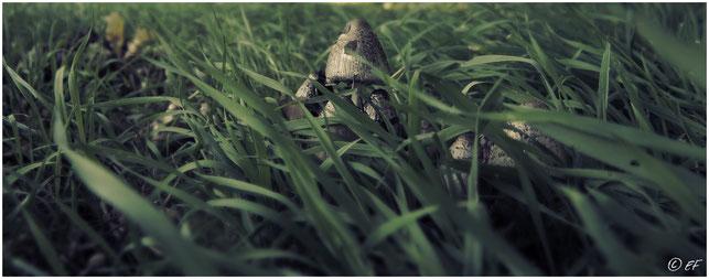 Gut versteckt im hohen Gras