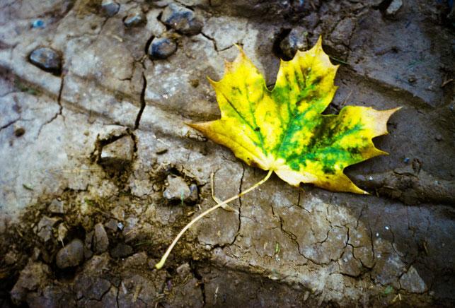 armes Herbstblatt - Ahorn
