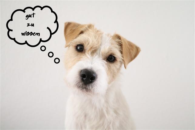 rudi.licious FAQs Parson Russell Terrier