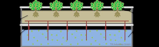 Dochtsystem, Aquaponik, Hydroponik, Kreislauf, Nachhaltigkeit, Tilt Industries, Schema, Grafik