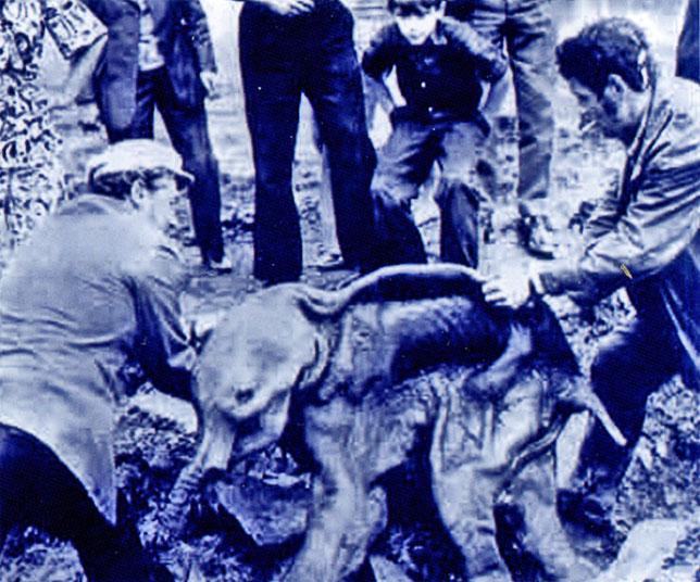 На раскопках мамонта. Якутия