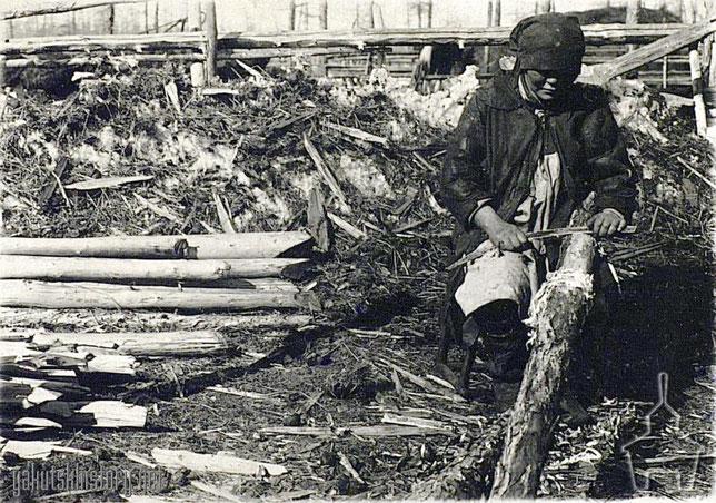 Якутка Марѳа Ѳедотова заготовляетъ лиственничную заболонь впрокъ