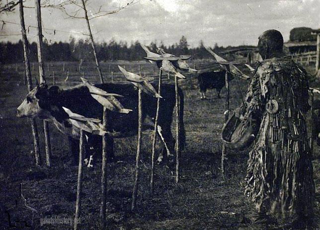 Жертвоприношение коровы