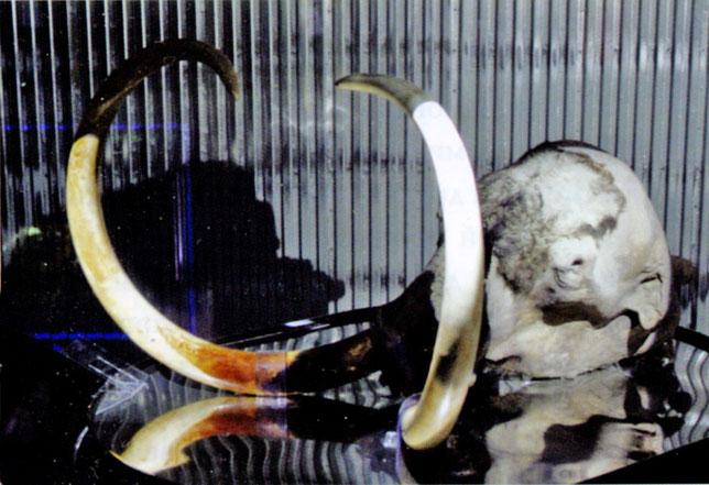 Юкагирский мамонт. Якутия