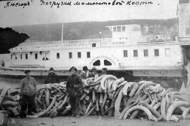 """Погрузка мамонтовой кости на пароход """"Акепсим Кушнарев"""". Кюсюр, правый берег Лены, в 120 км от Тикси. Из личного архива Анны Лавровой"""