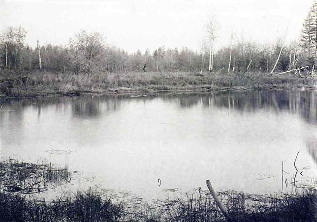 Озеро в тайге. Снимок В.И. Иохельсона