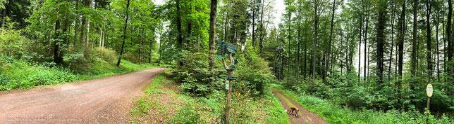 Das Vessertal im Thüringer Wald
