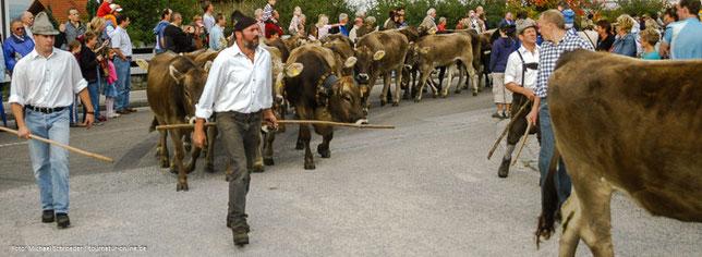 Die Viehscheid, ein Brauchtum, das auch Almabtrieb genannt wird.