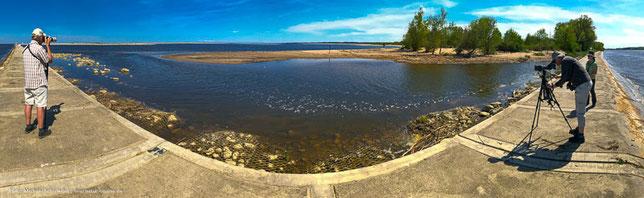 Birdwatching auf der Weichsel-Mündung Delta Birding