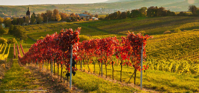 Goldener Oktober im Weinland Pfalz