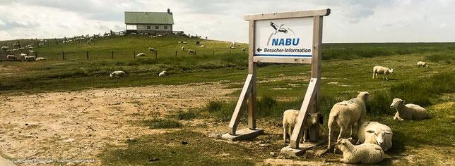 Nabu Infocenter auf der Hamburger Hallig