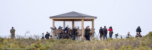 Beobachtungshütte beim Vogelzug in Falsterbö - Schweden