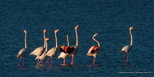 Strand Wohnmobil Cabo de Gata Nejar Naturpark Parc Natural Vogelbeobachtung Natur Naturbeobachtung Vögel Birding Halbwüste Biosphärenreservat Vulkanismus Vulkane