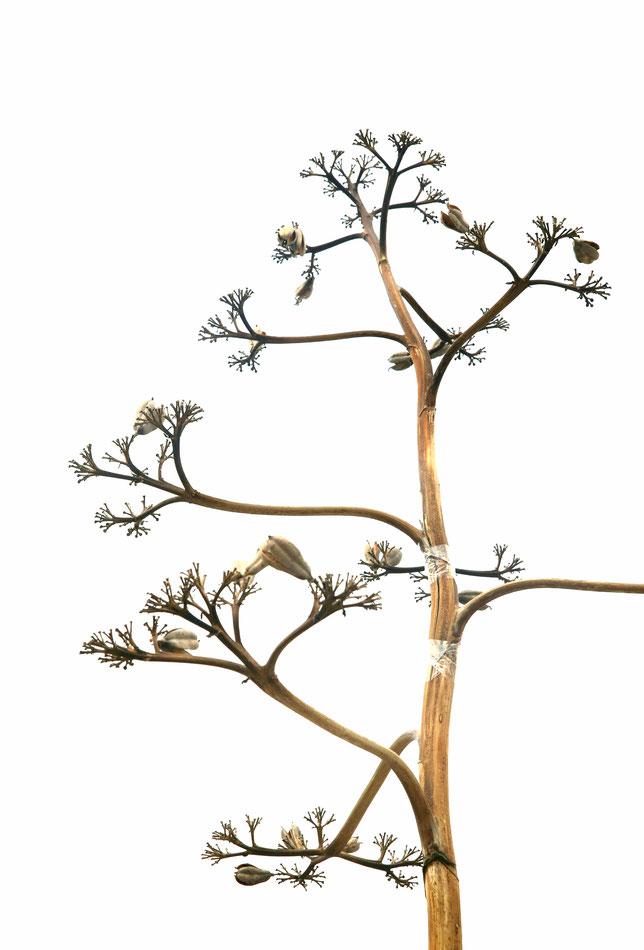 Lily - Foto 4 - W(w)under Baum