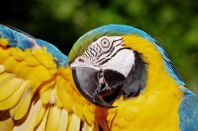 Aves Exóticas En Tu Android
