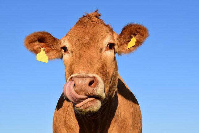 Hombre Muere Aplastado Por Una Vaca Mientras Duerme