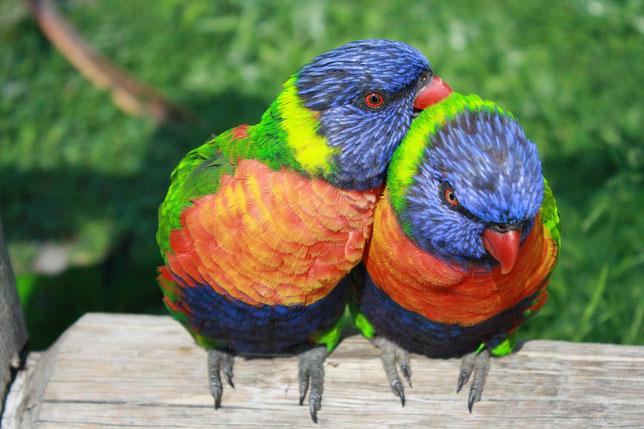 Aves Exóticas Aplicaciones Para Tu Android