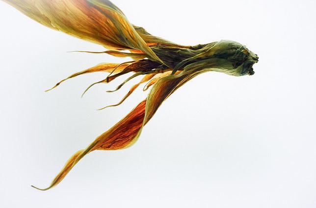 "Strange animal © JOSE LAIÑO  ""Mención Honorable Profesional en Bellas Artes Naturaleza Muerta"" PX3 2015"