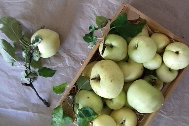 Apfelfakten