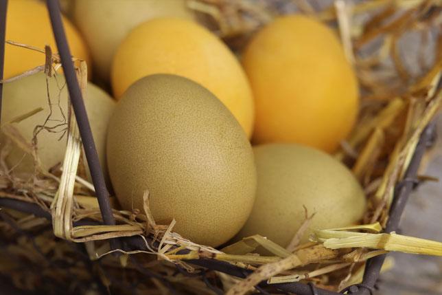 Eier gefärbt mit Curcuma und Brennnesselpulver