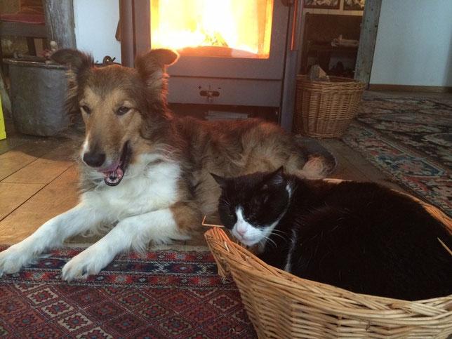 """Und macht es wie Marie, anschließend aufwärmen am kuscheligen Kaminfeuer. Das macht herrlich müde. Kater Filou hält hier seinen """"Winterschlaf"""". Er steht nur kurz zum Fressen und so auf."""