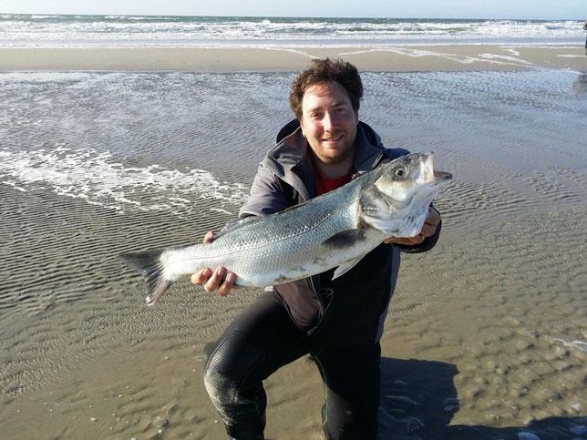 Wolfsbarsch gefangen von Jens in der Nordsee.
