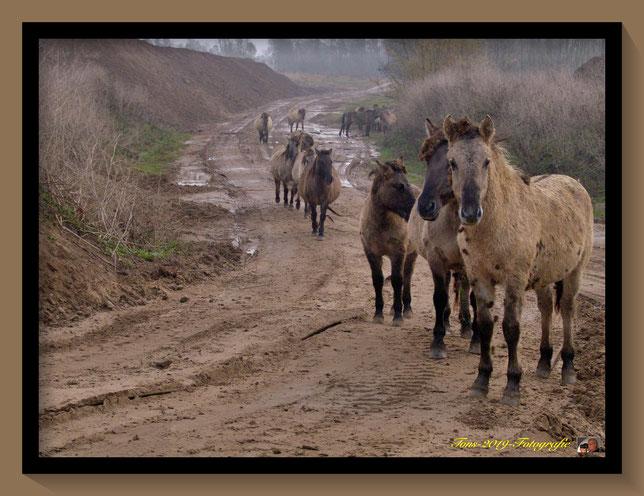 Paarden. in de millingerwaard. toen het nog echt mooi was daar