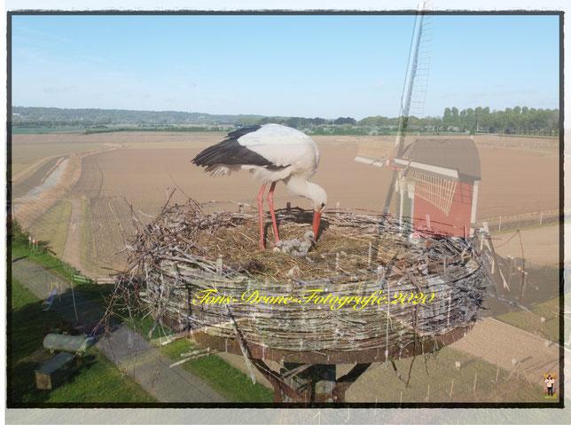 Ja en dan op 05-05-2020 nest met vijf jonge ooievaars hoe mooi kan het zijn