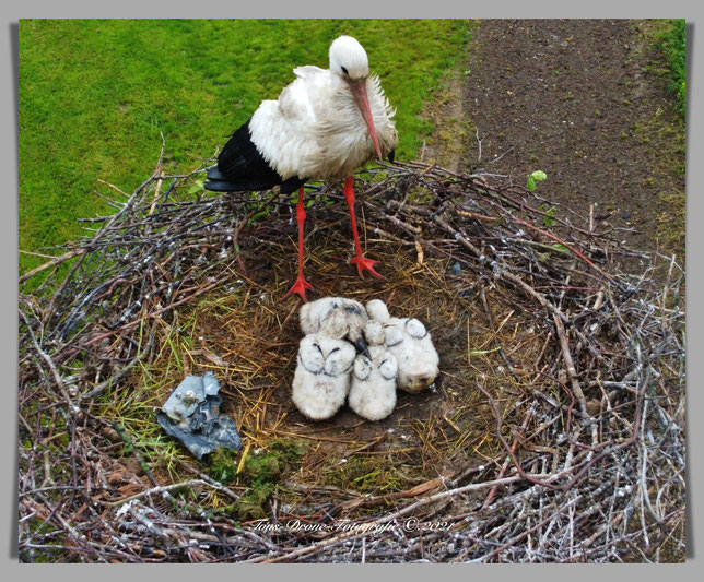 Nest Thornschemolen.