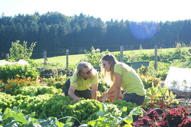 Salat, frisch, ökologisch, biologisch, bio, nachhaltig, frisch, frisches Gemüse