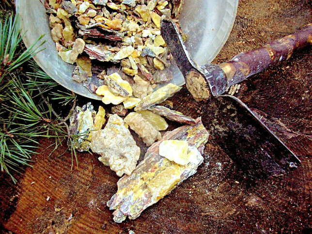 Harz Räucherharz Kiefernharz sammeln Waldweihrauch Räuchern Räucherwerk Nadelhölzer