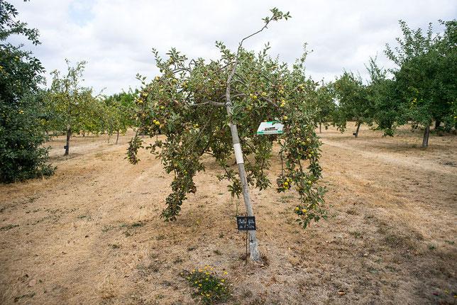 Photo de Antonin Sabot d'un verger bien productif - Planter un arbre c'est investir dans l'avenir- soyons patient